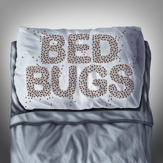 state bed bug laws Colorado